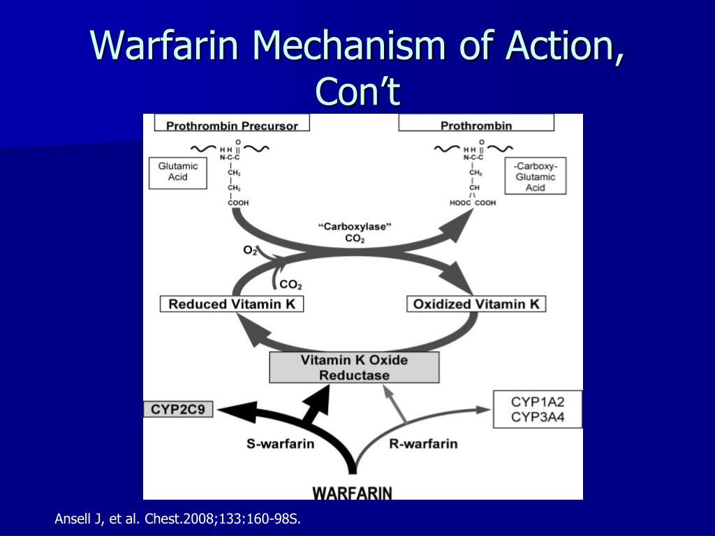 Warfarin Mechanism of Action