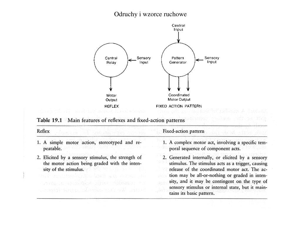 Odruchy i wzorce ruchowe