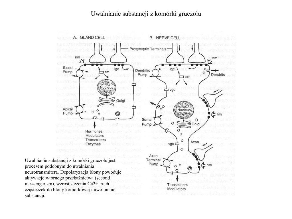 Uwalnianie substancji z komórki gruczołu