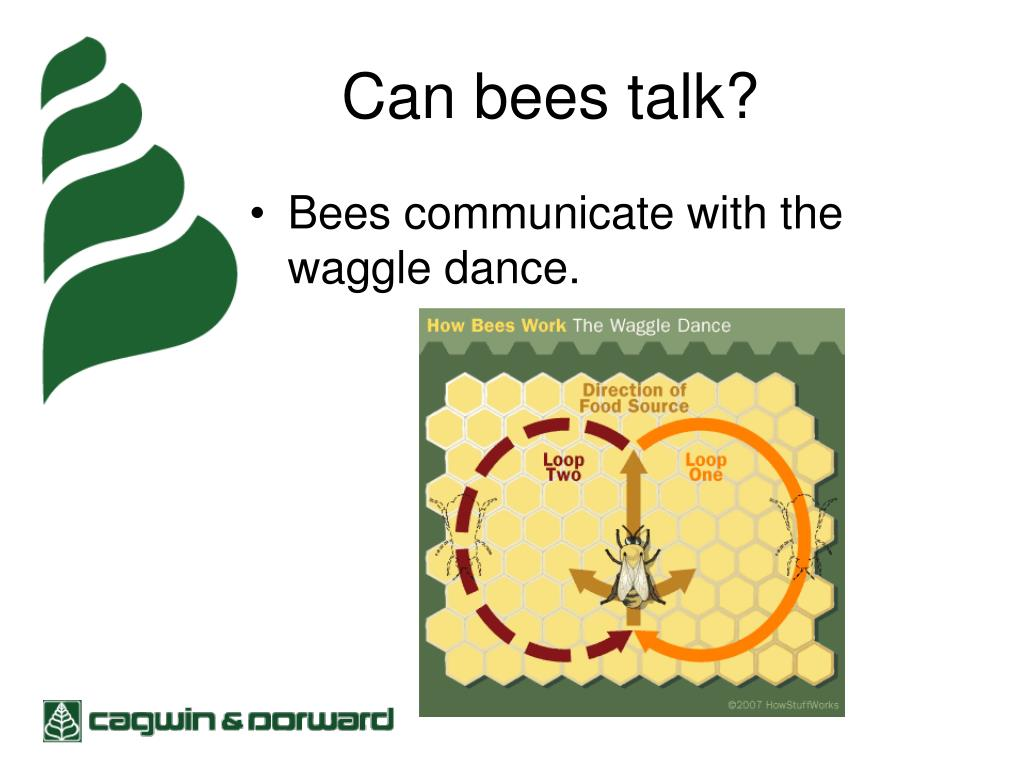 Can bees talk?