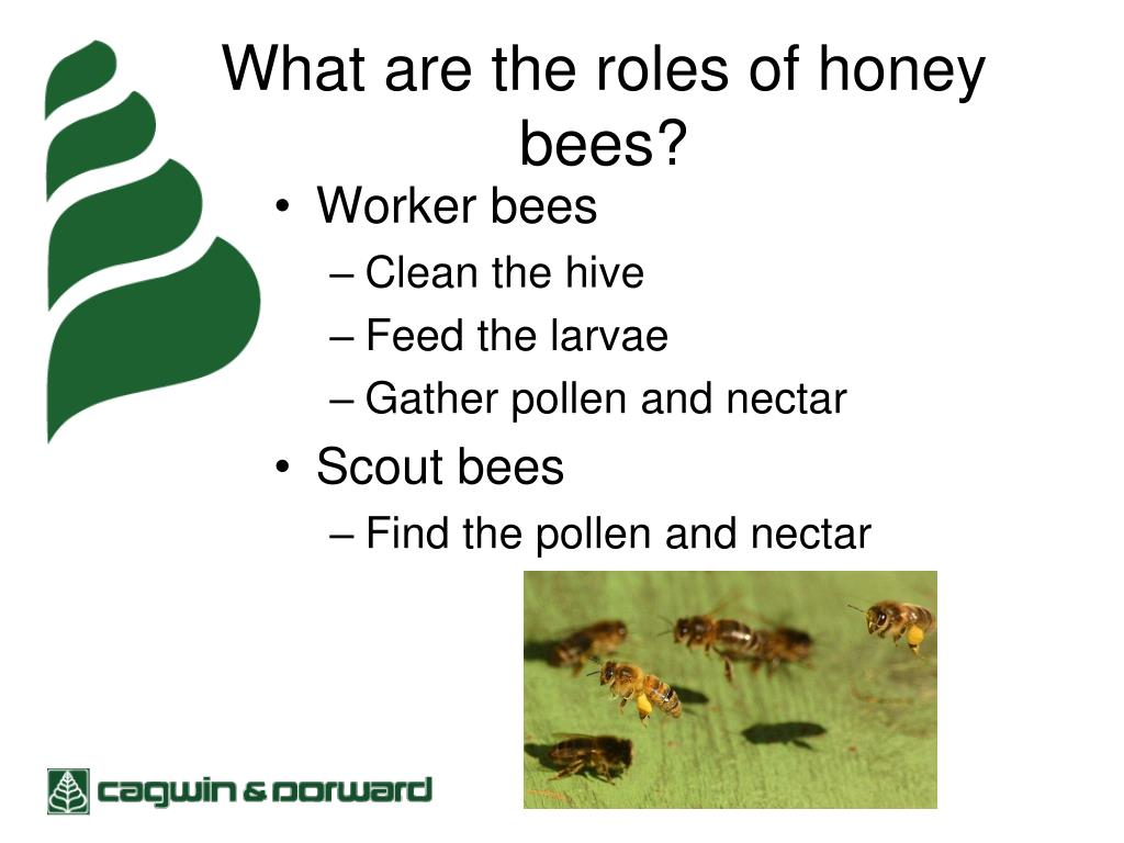 What are the roles of honey bees?