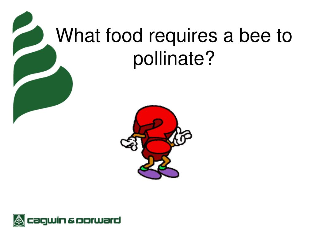 What food requires a bee to pollinate?