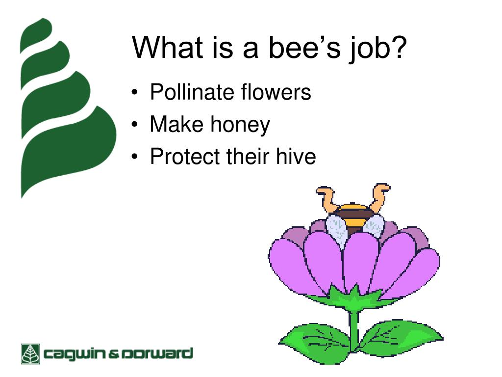 What is a bee's job?