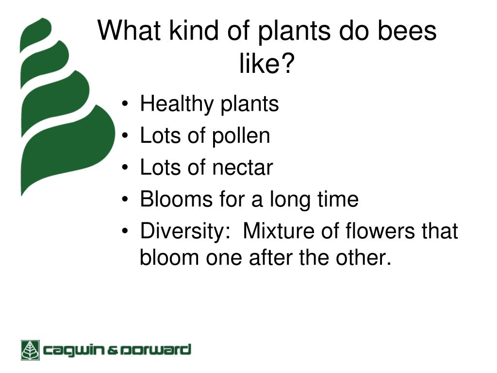 What kind of plants do bees like?
