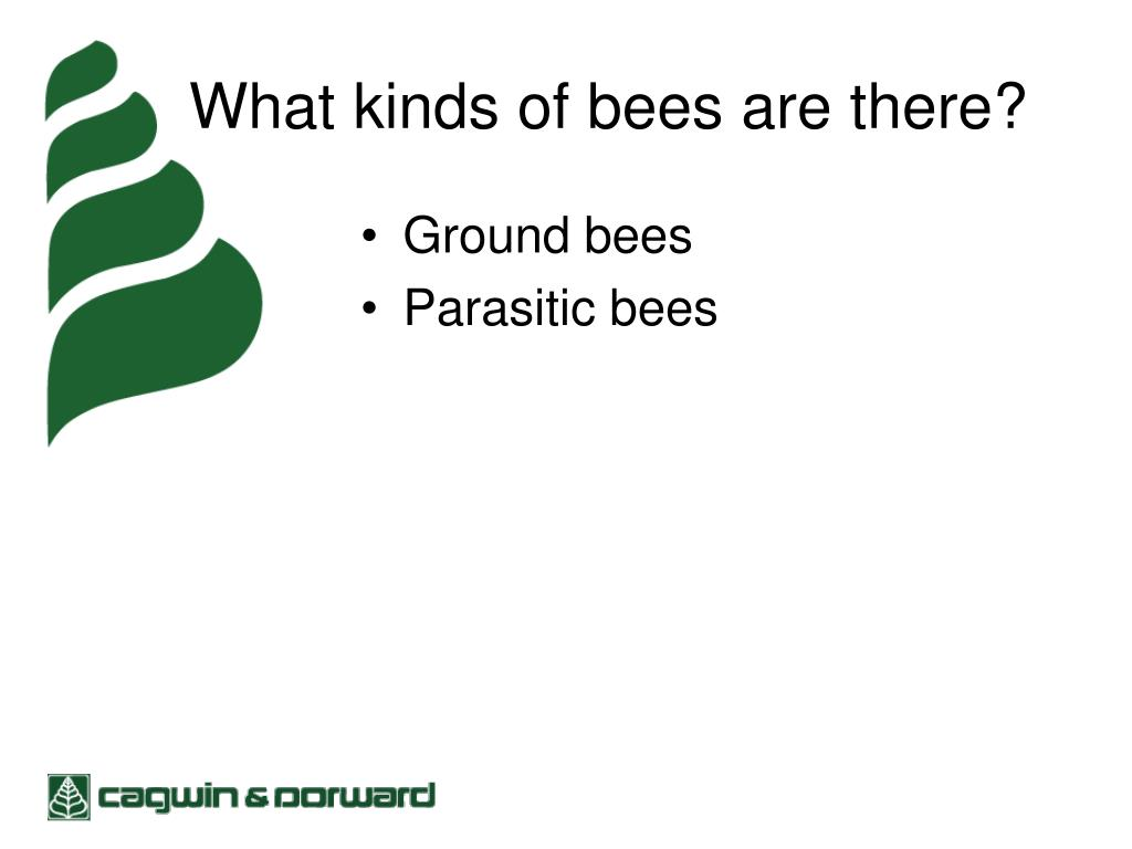 What kinds of bees are there?