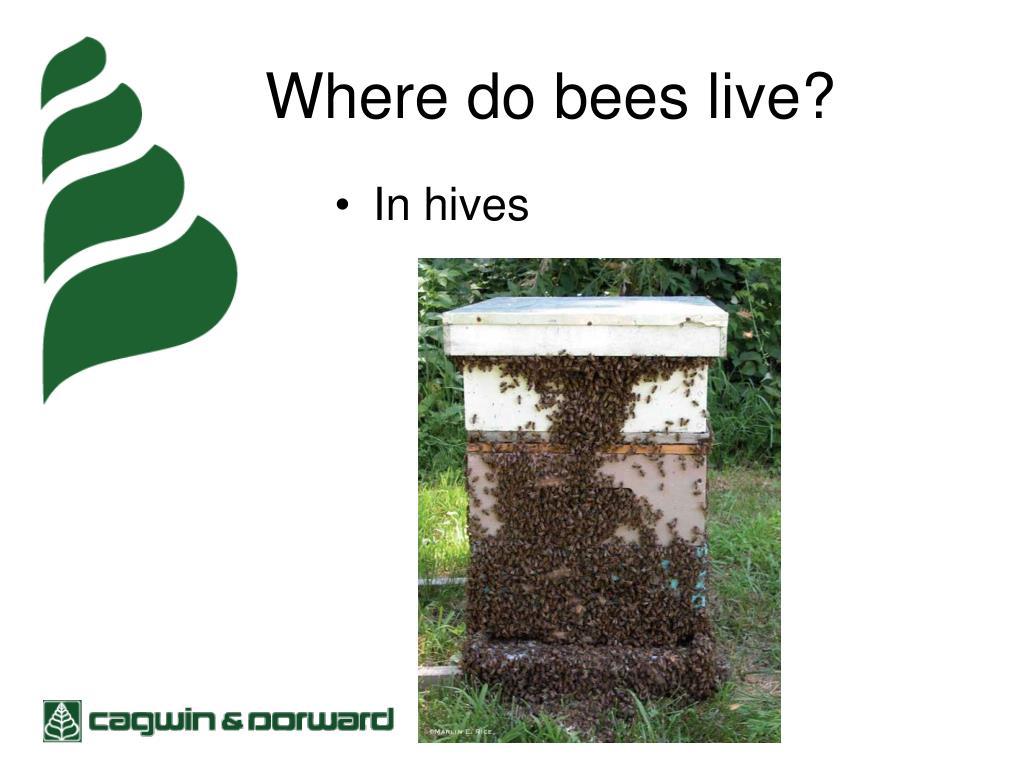 Where do bees live?