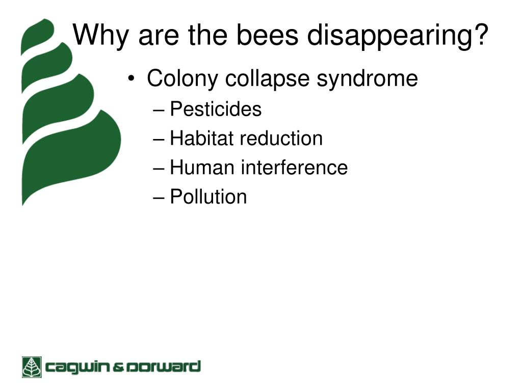 Why are the bees disappearing?