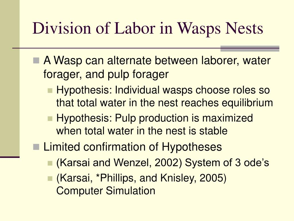 Division of Labor in Wasps Nests