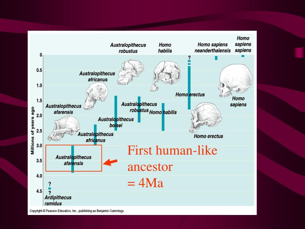 First human-like