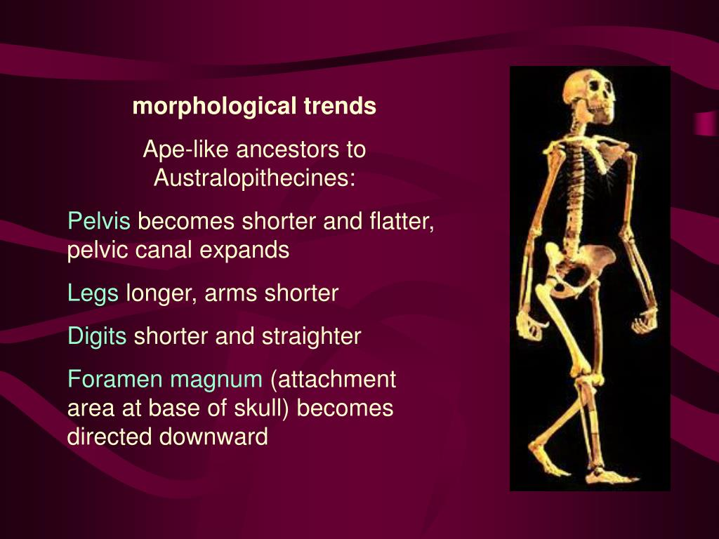 morphological trends