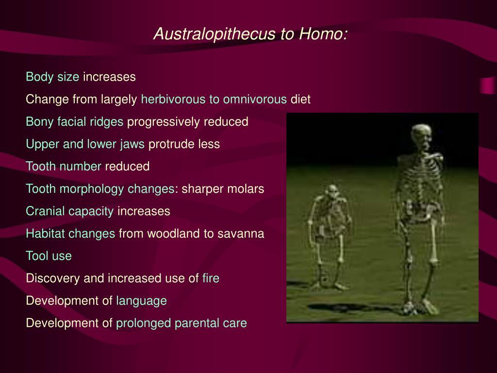 Australopithecus to Homo: