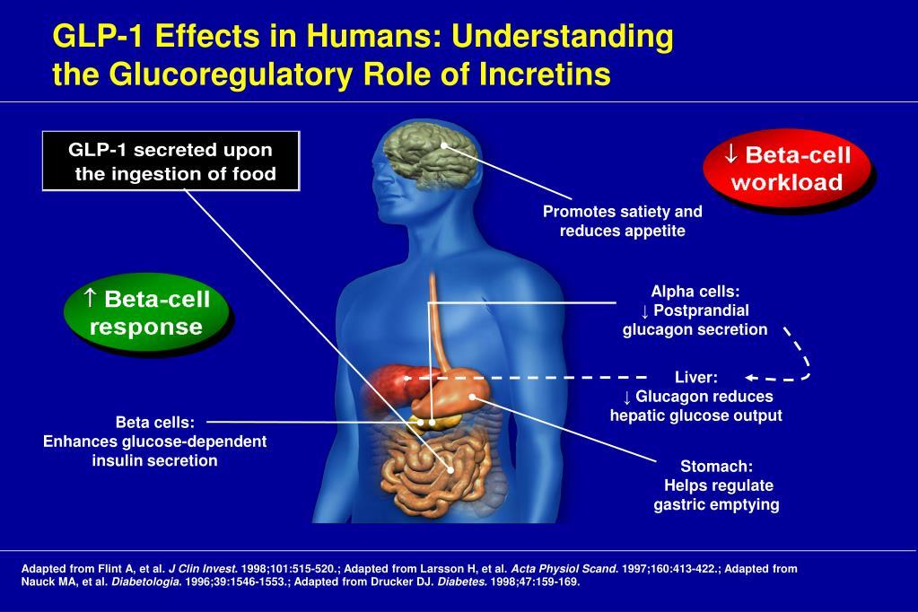 GLP-1 Effects in Humans: Understanding