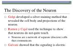 the discovery of the neuron