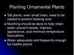 planting ornamental plants58