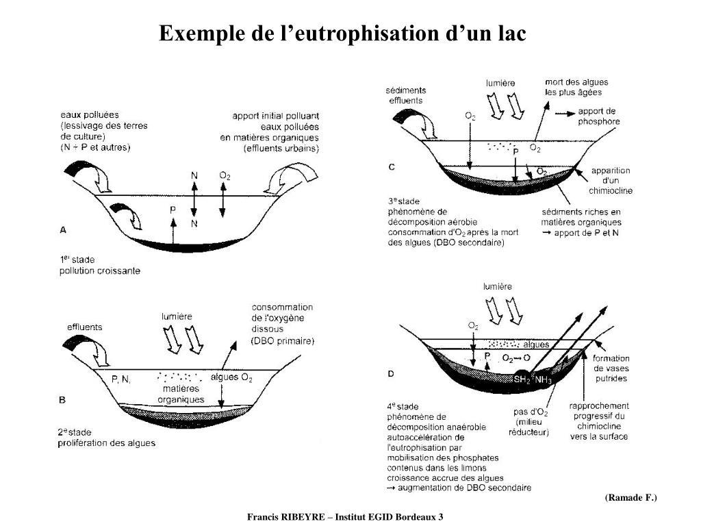 Exemple de l'eutrophisation d'un lac