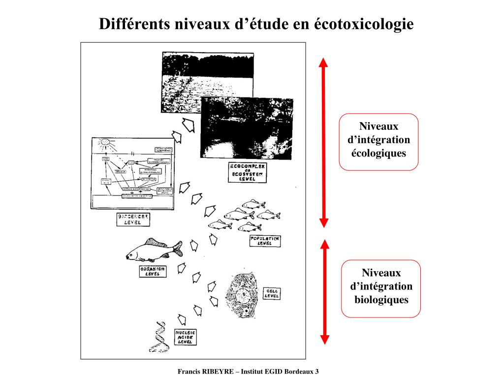 Différents niveaux d'étude en écotoxicologie