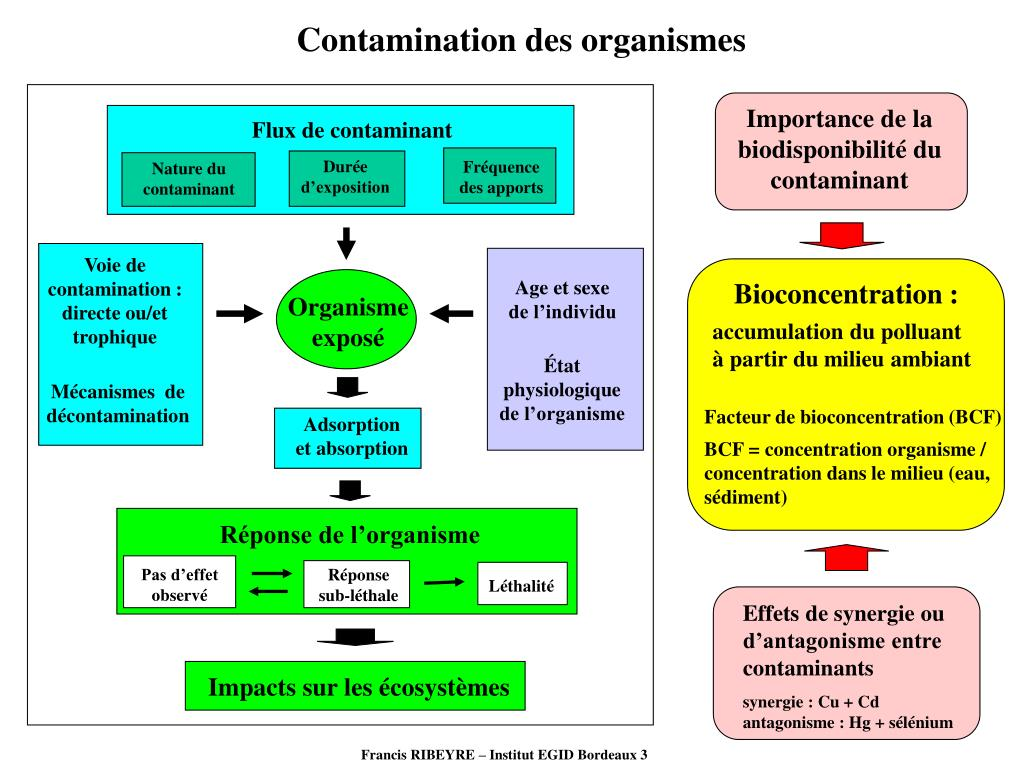 Contamination des organismes