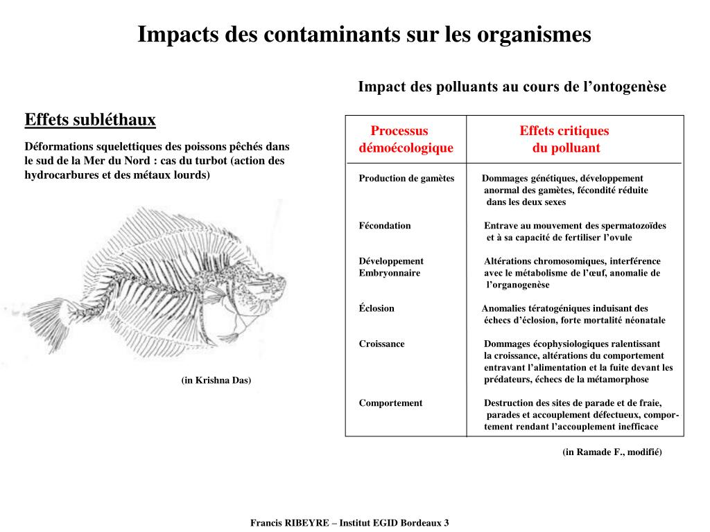 Impacts des contaminants sur les organismes