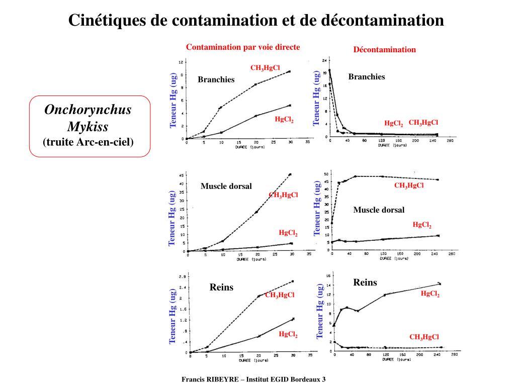 Cinétiques de contamination et de décontamination