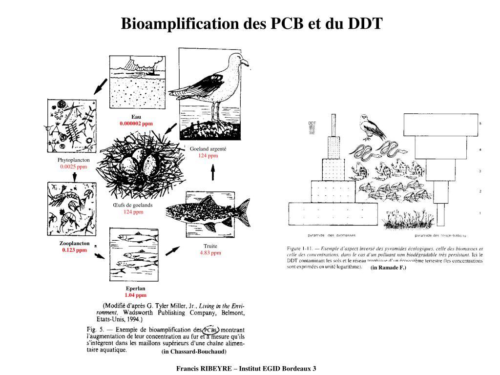 Bioamplification des PCB et du DDT