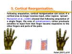 5 cortical reorganisation