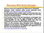 recovery after brain damage