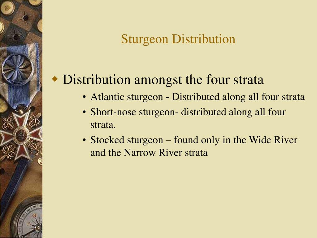 Sturgeon Distribution