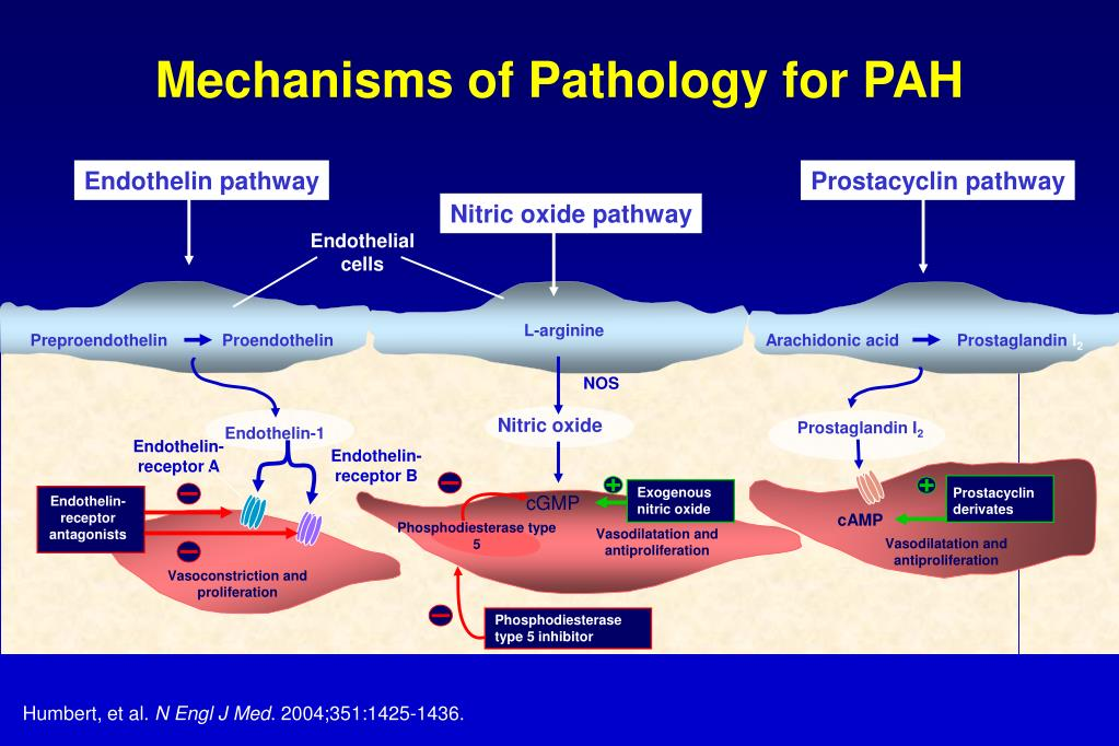 Mechanisms of Pathology for PAH