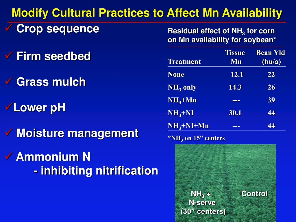 Modify Cultural Practices to Affect Mn Availability