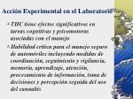 acci n experimental en el laboratorio55