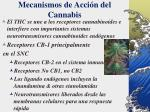 mecanismos de acci n del cannabis