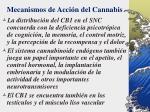 mecanismos de acci n del cannabis6