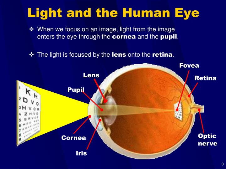 Light and the human eye