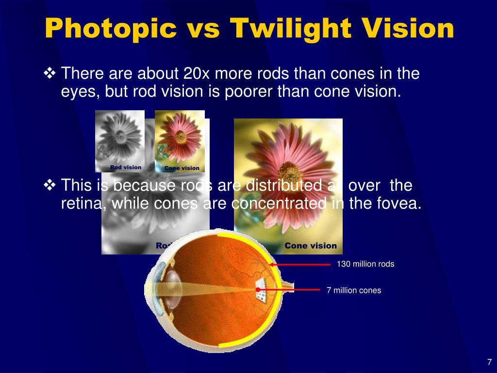 Rod vision