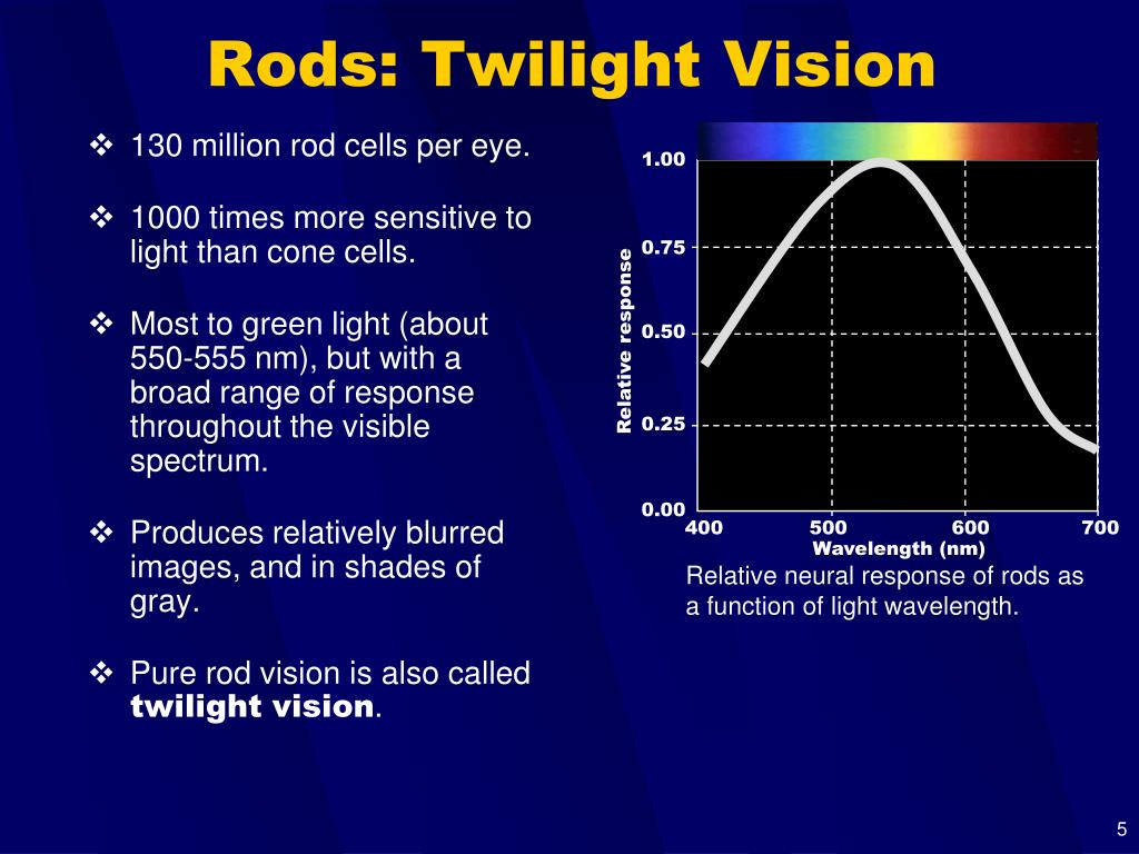 Relative neural response of rods as a function of light wavelength.