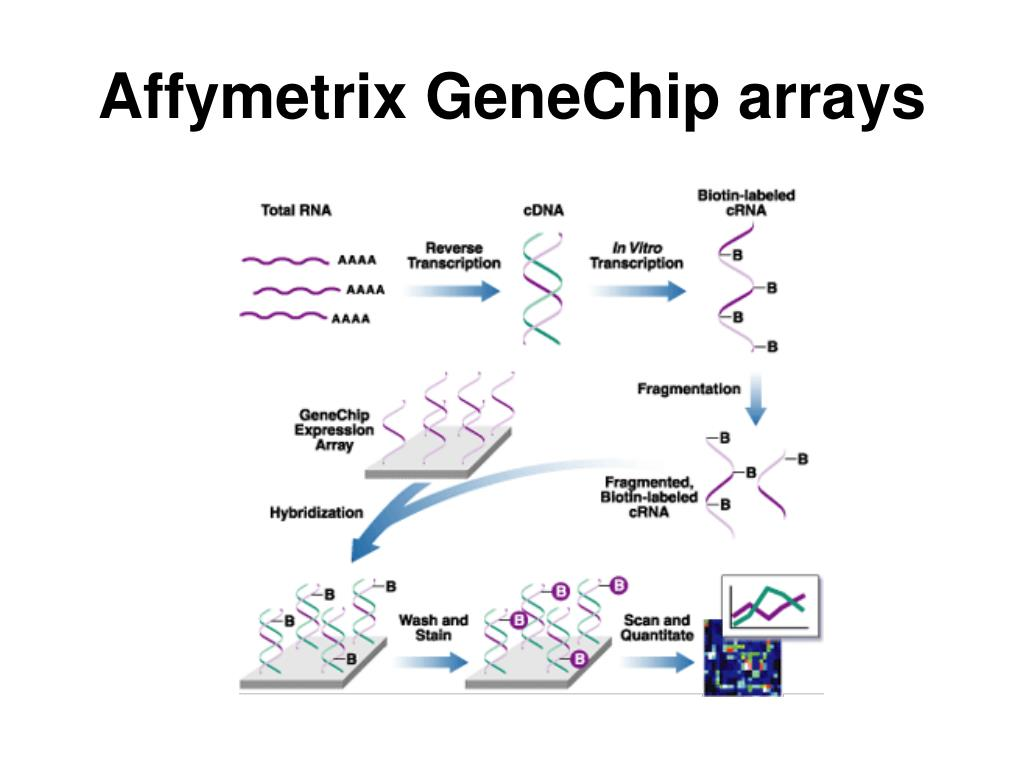 Affymetrix GeneChip arrays