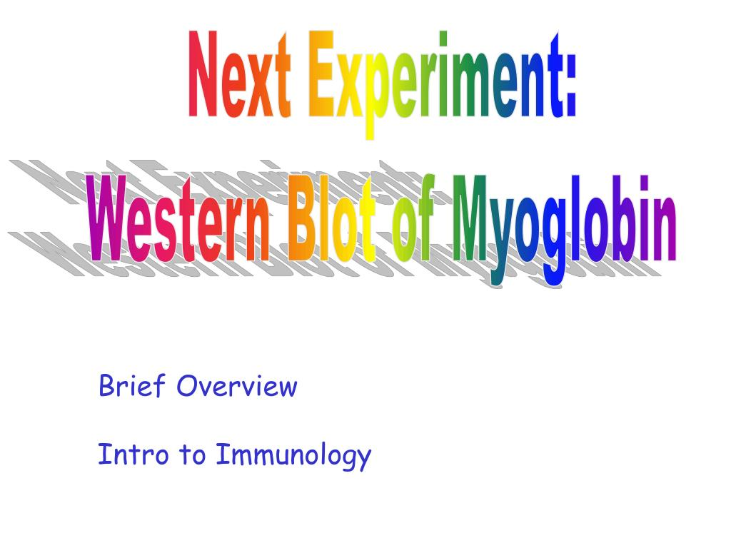 Next Experiment: