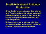 b cell activation antibody production