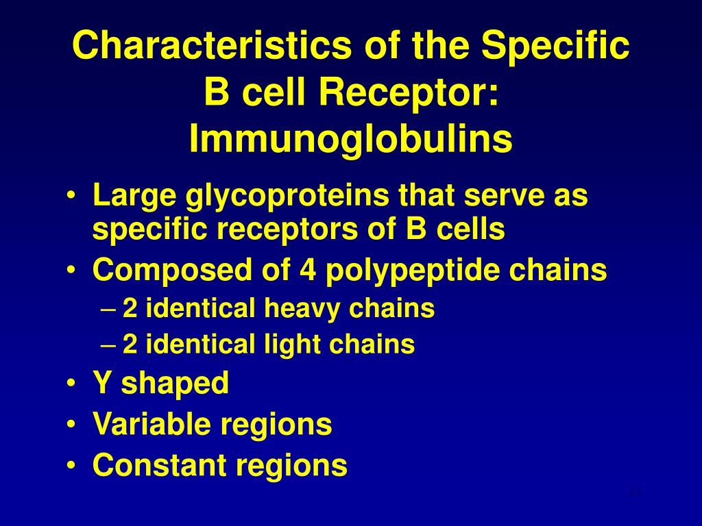 Characteristics of the Specific B cell Receptor: Immunoglobulins