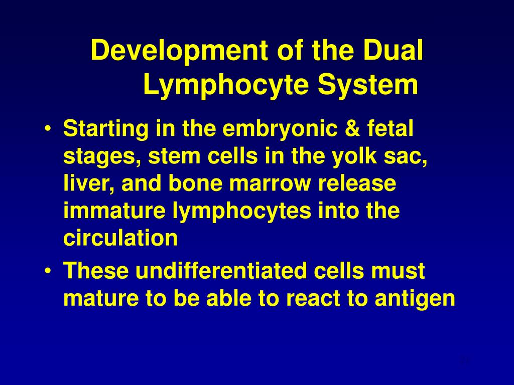 Development of the Dual Lymphocyte System
