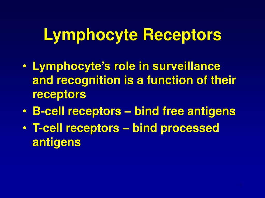 Lymphocyte Receptors
