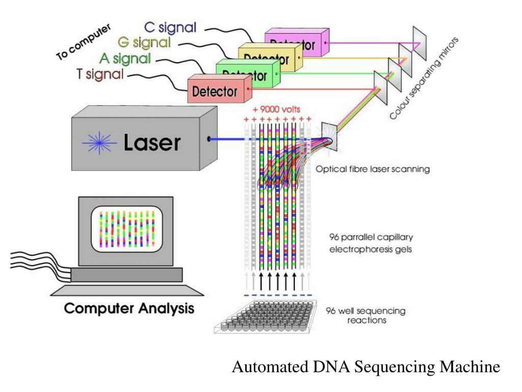 Automated DNA Sequencing Machine