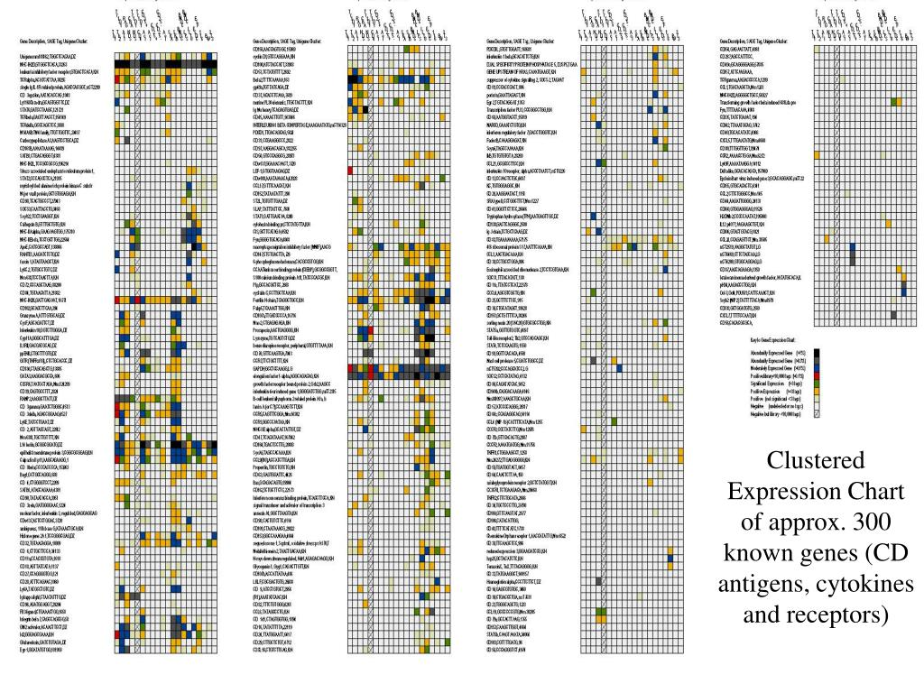 Clustered Expression Chart of approx. 300 known genes (CD antigens, cytokines and receptors)