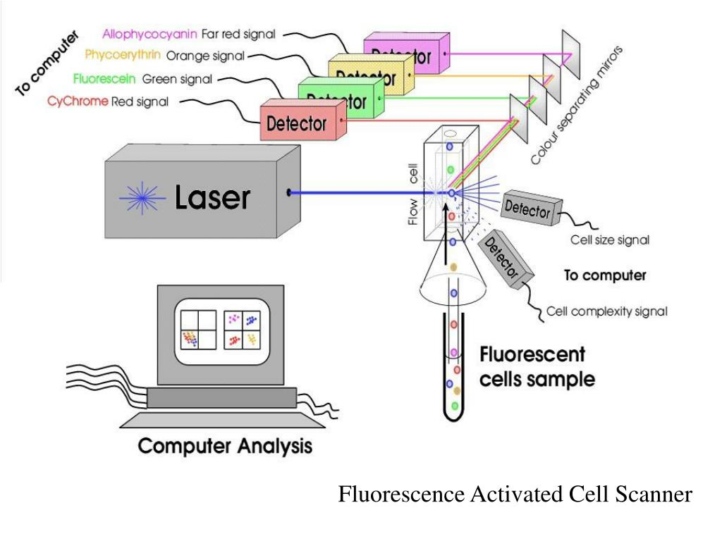 Fluorescence Activated Cell Scanner