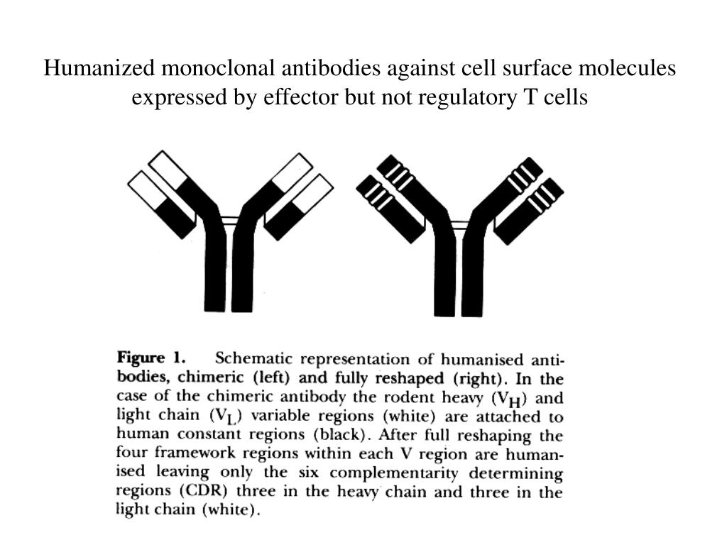 Humanized monoclonal antibodies against cell surface molecules