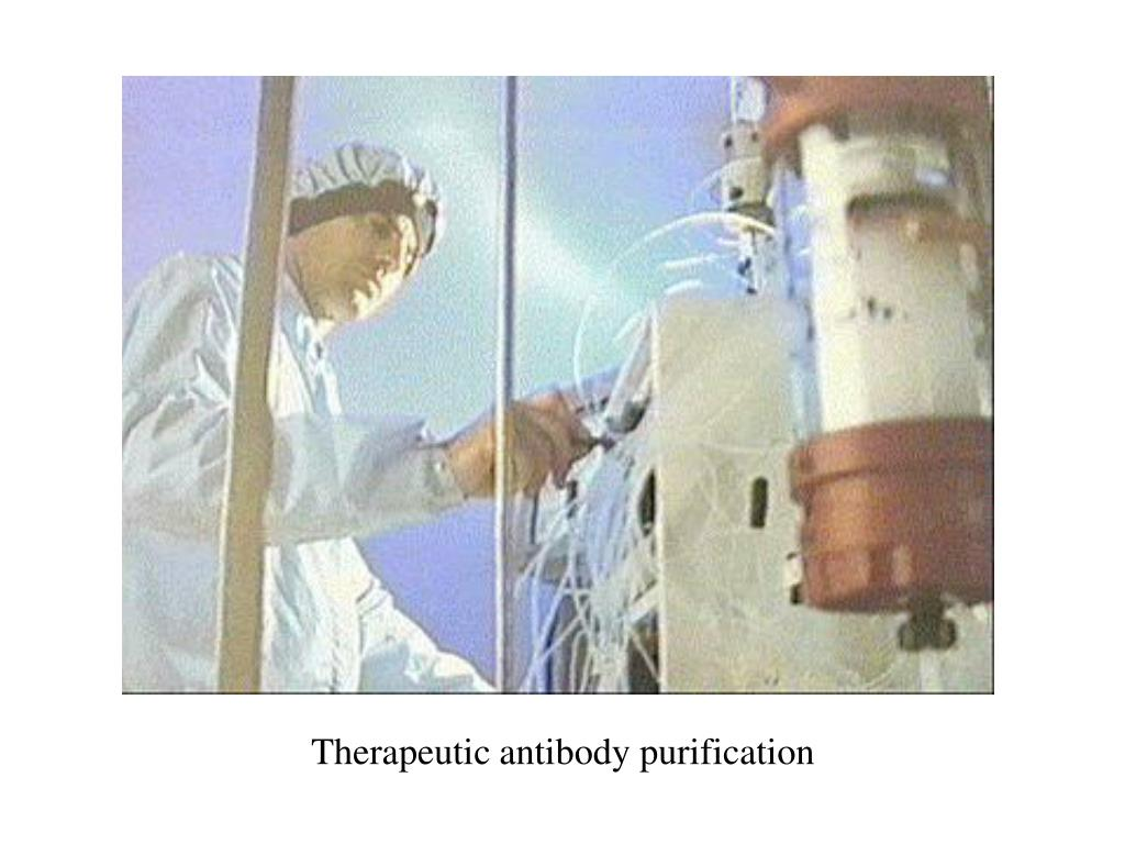 Therapeutic antibody purification