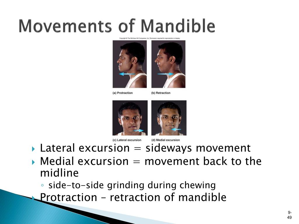 Movements of Mandible