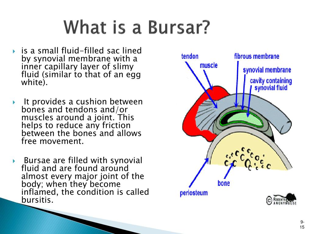 What is a Bursar?