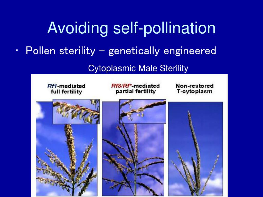 Avoiding self-pollination