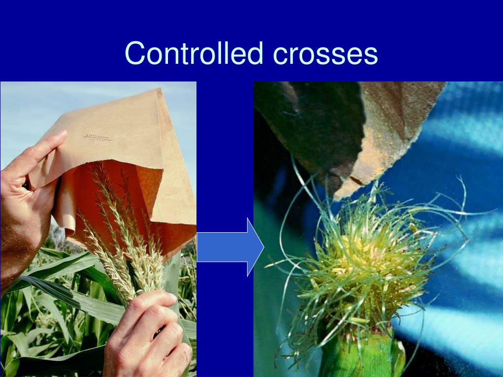 Controlled crosses